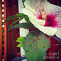 Hibiscus Flower In Bloom by Charlie Cliques