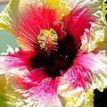 Hibiscus In Bloom by Wayne Wood