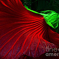 Hibiscus Red by Mike Nellums