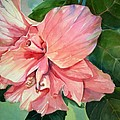 Hibiscus by Sue Kemp