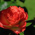 Hidden Beauty by Tikvah's Hope