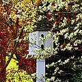 Hidden Bird House by Rodney Lee Williams