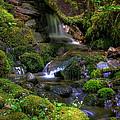 Hidden Brook by John Absher