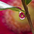 Hidden Droplet by Viola Jasko