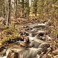 Hidden Forest Treasure by Earl Nelson