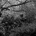 Hidden Garden In Black And White by Jeanette C Landstrom