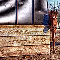 Hidden Horse by Ian Van Schepen