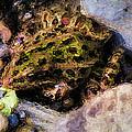 Hidden In The Rocks by Jo-Anne Gazo-McKim