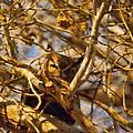 Hidden Owl by Cathy Anderson