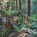Hidden Rock Wall by James Wheeler