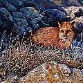 Hide And Seek by Craig Burgwardt