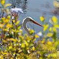 Hiding Egret by Stephen Whalen