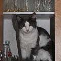 Hiding In The Cabinet by Michelle Powell