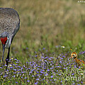 Hiding In The Flowers by Barbara Bowen