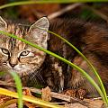 Hiding In The Grass by Richard Kitchen