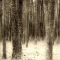Hiding In The Trees By Diana Sainz by Diana Raquel Sainz