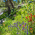 High Country Wildflowers by Lynn Bauer