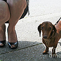 High Heels And A Dachsund by Barbara McMahon