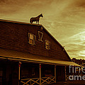 High Horse by Tom Gari Gallery-Three-Photography