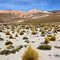 High In The Chilean Altiplano by James Brunker