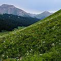 High Meadow  by Kevin Buffington