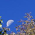 High Moon by Chris Babcock