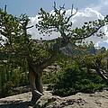 High Mountain View by Walt Sterneman