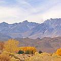 High Sierra Autumn by Marilyn Diaz