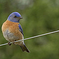 High Wire by Jean Noren