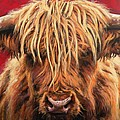 Highland Cow by Leigh Banks