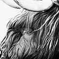 Highland Cow Mono by John Farnan
