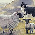 Highland Spirit by John Silver