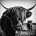 Highlander 1 by Janet Burdon