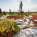 Highlands Of West Virginias Dolly Sods by Bill Swindaman