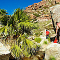 Hikers At Oasis On Borrego Palm Canyon Trail In Anza-borrego Desert Sp-ca  by Ruth Hager