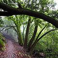 Hiking Huckleberry by Hugh Stickney