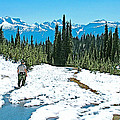 Hiking In Spring In Revelstoke National Park-british Columbia  by Ruth Hager