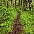 Hiking Through The Blue Ridge I by Dan Carmichael
