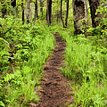 Hiking Through The Blue Ridge II by Dan Carmichael