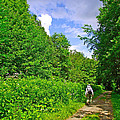 Hiking Trail Along Rivier Du Nord In The Laurentians North Of Montreal-qc by Ruth Hager
