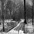 Hiking Trail Bridge With Shadows 3 Bw by Mary Bedy