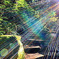 Hiking Trail Sun Flares by Charline Xia