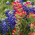 Hill Country Bloom by Rebecca Bayer