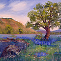 Hill Country Spring by Linda Poe