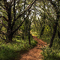 Hill Country Trail by Bob Marquis