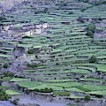Hill Modified For Agriculture, Tetang by Robert Caputo