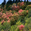 Hill Side Colors by Colleen McIntier