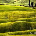 Hills Of Toscany by Jaroslaw Blaminsky