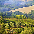 Hills Of Tuscany by David Letts