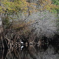 Hillsborough Egret 01 by Carol Kay